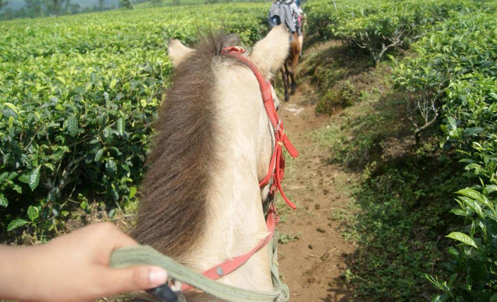 Menungang Kuda di Gunung Patuha Bandung