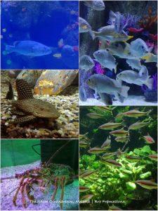 Hidupan Laut The Shore Oceanarium Melaka