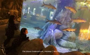 Lihat Hidupan Laut The Shore Oceanarium Melaka