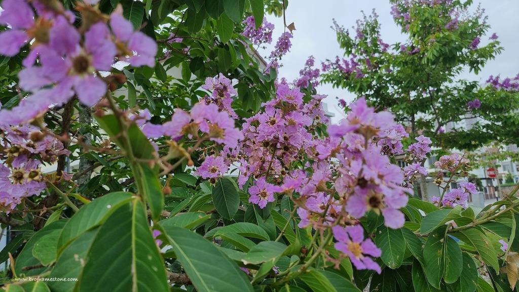 Bunga Purple